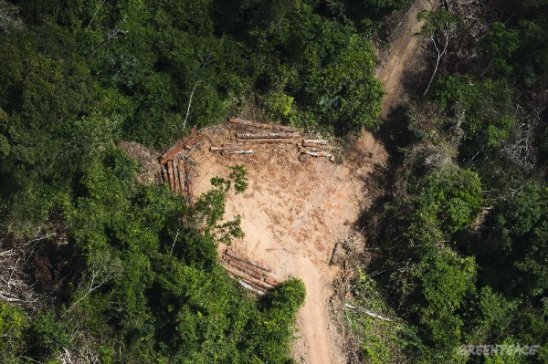 Amazon Rainforest Documentation